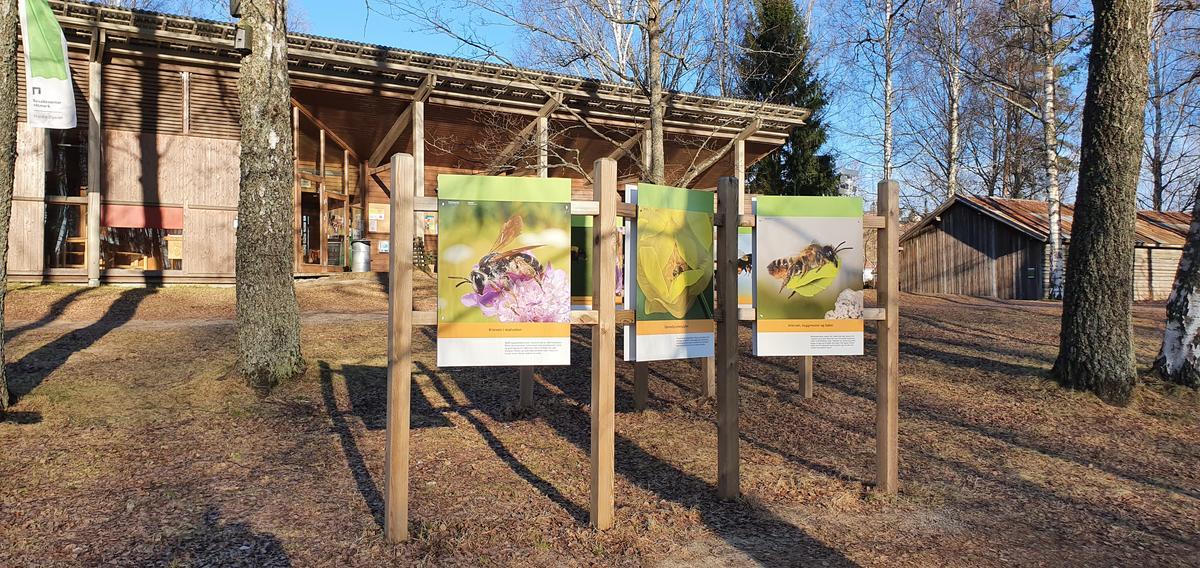 Foto av uteutstilling om pollinerende insekter (Foto/Photo)