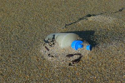 Brun sandstrand der det stikker opp en gammel spenolflaske av sanden.. Foto/Photo