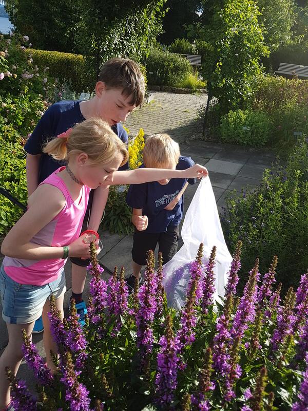 Tre barn samarbeider om å fange og studere humler i Urtehagen på Domkirkeodden, (Foto/Photo)