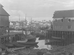 Prot: Nordland - Honningsvaag