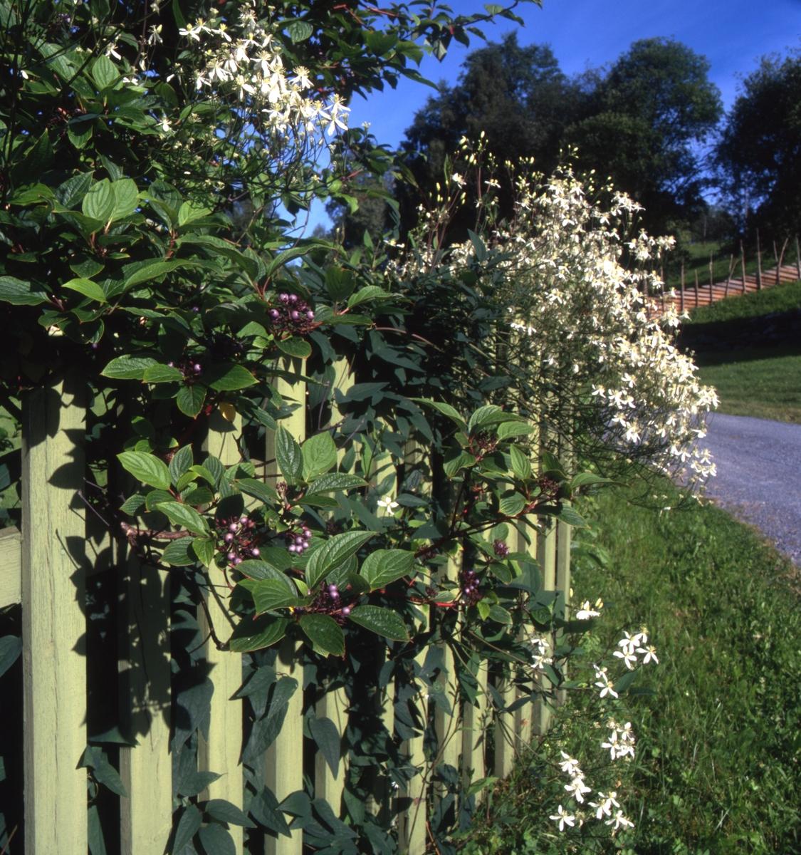 DOK:2000, Aulestad, hage, blomster, gjerde,