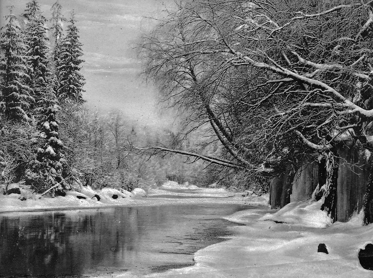 Landskap, trær og elv, vinter