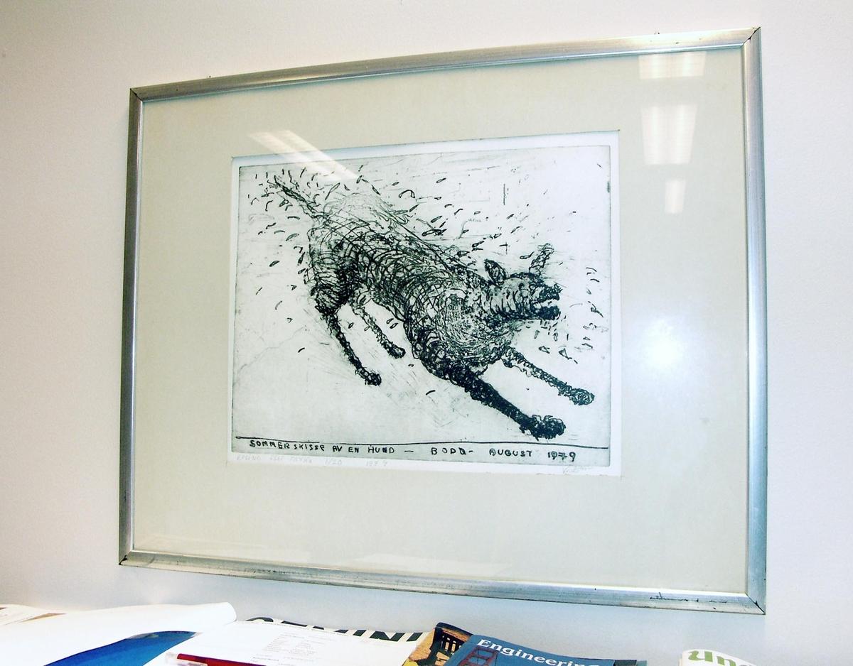 Sommerskisse av en hund [Grafikk]