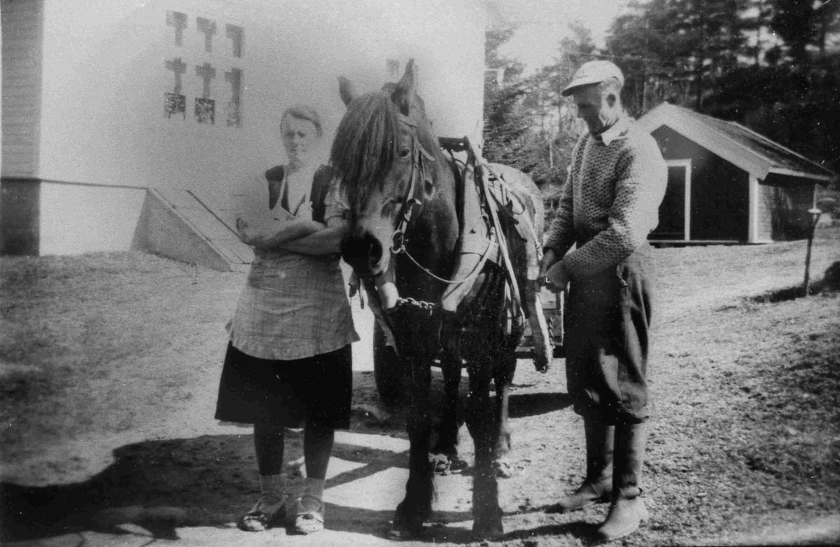 Bilder fra Birkenes kommune Hesten Vårvinne ca 1950