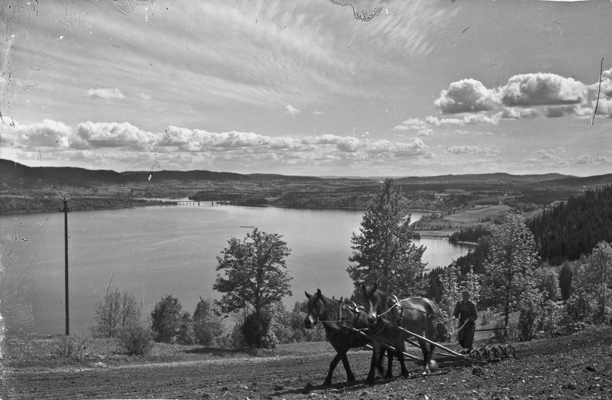 Harving med hest. Utsyn over Mjøsa fra vestsiden - fra Feiring.