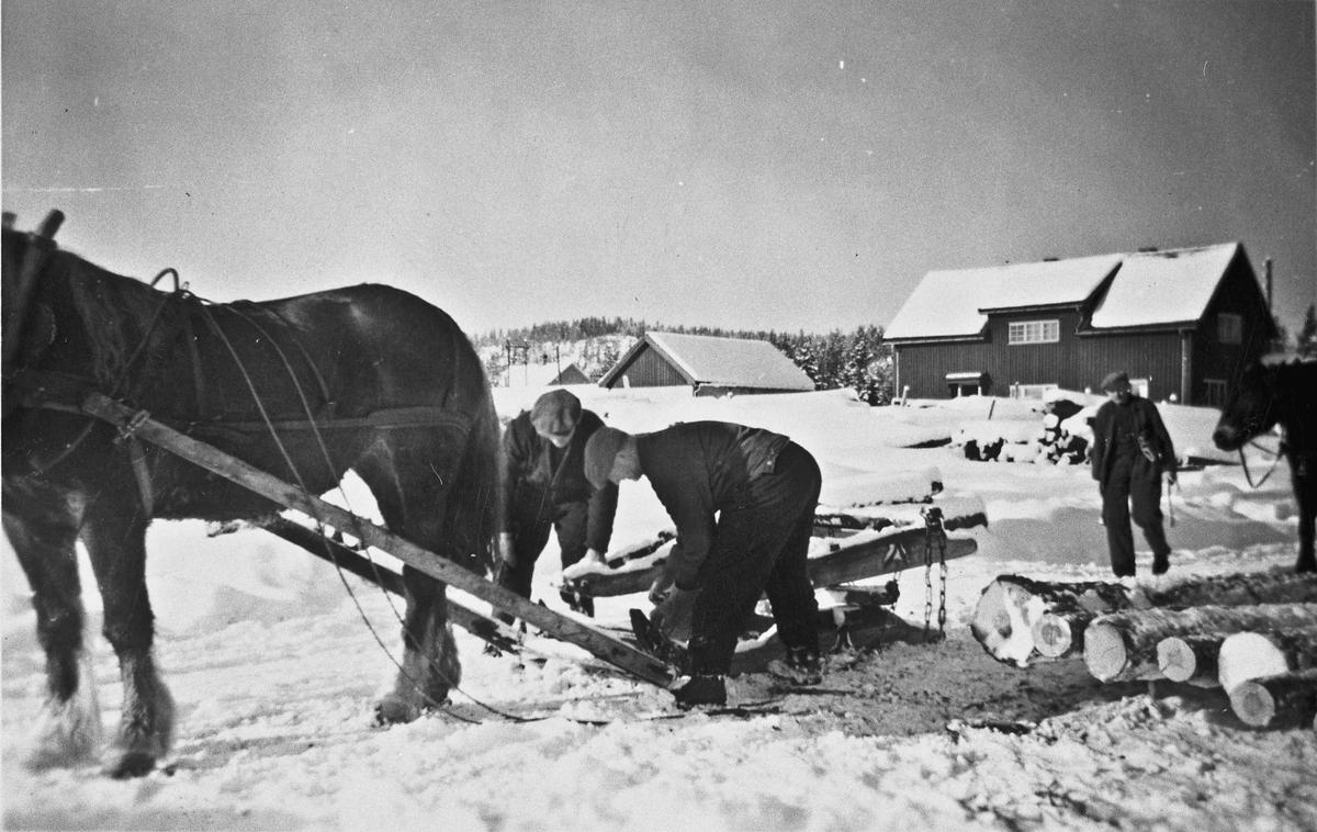 Tømmerkjøring med hest. Bernt Maurbråten på Jønsjøsaga - bilde 1.