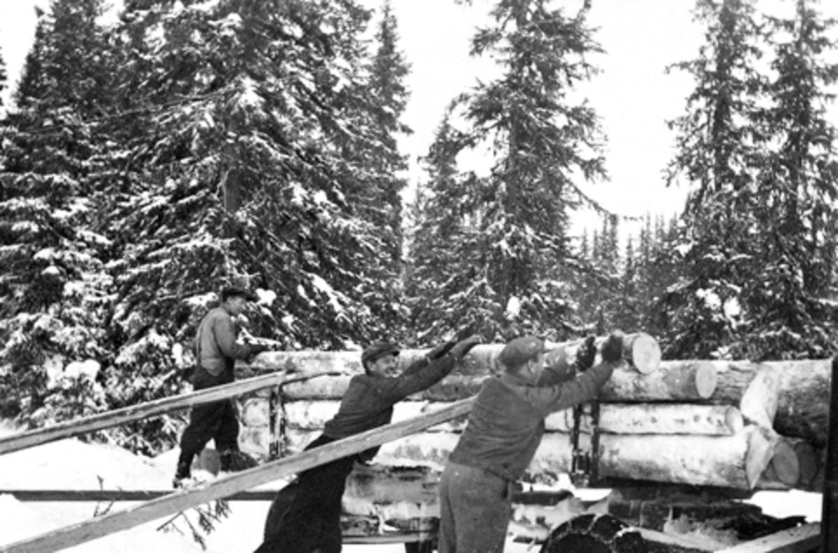 Skogsarbeidere drar tømmer. Lessing med slåter på lastebil. Fra venstre er Magne Solheim, Alf Nordengen, Ole Røset, vinter ved Geitryggen, Furnes Almenning.