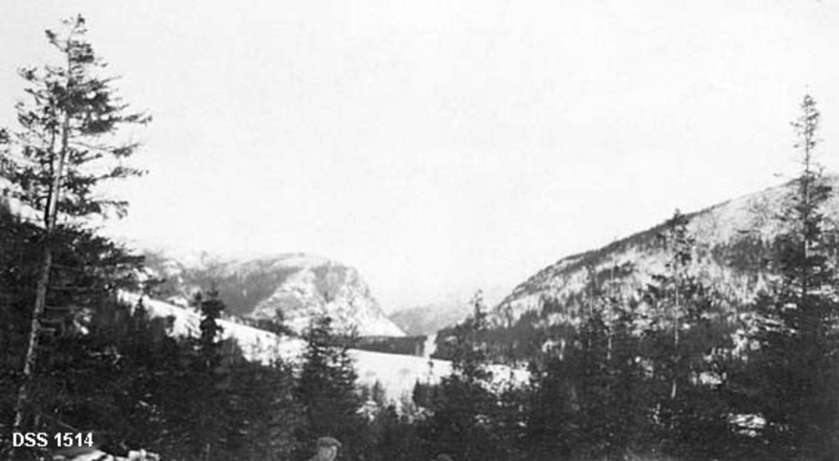 Fjelde skog i Flatanger.  I forgrunnen ses en skog med blandet gran- og furubestand.  Hodet på en mann skimtes ved nedre bildekant.  I mellomgrunnen ei åpen, snødekt flate, antakelig et jorde.  I bakgrunnen nokså bratte fjellrygger med spredte skogflater.