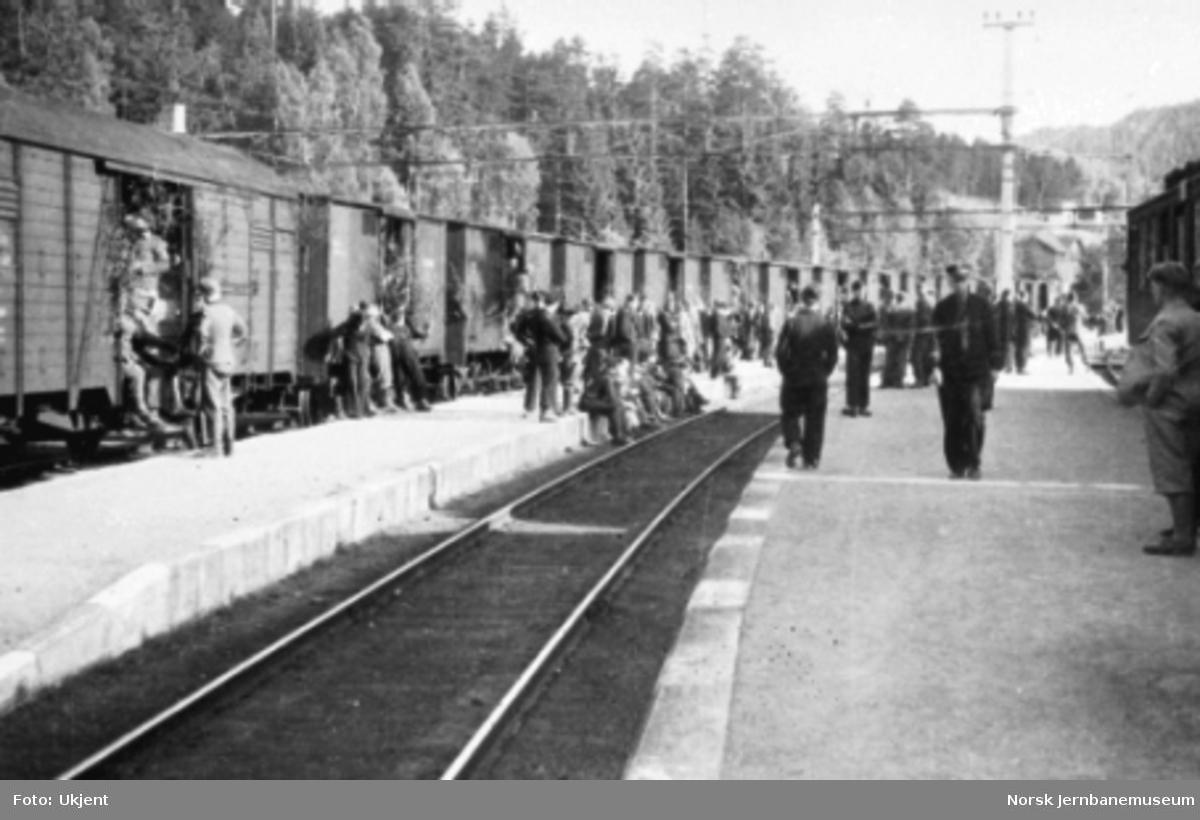 Tyskere i godsvogner på hjemreise fra Rjukan i 1945; vognene er pyntet med løv