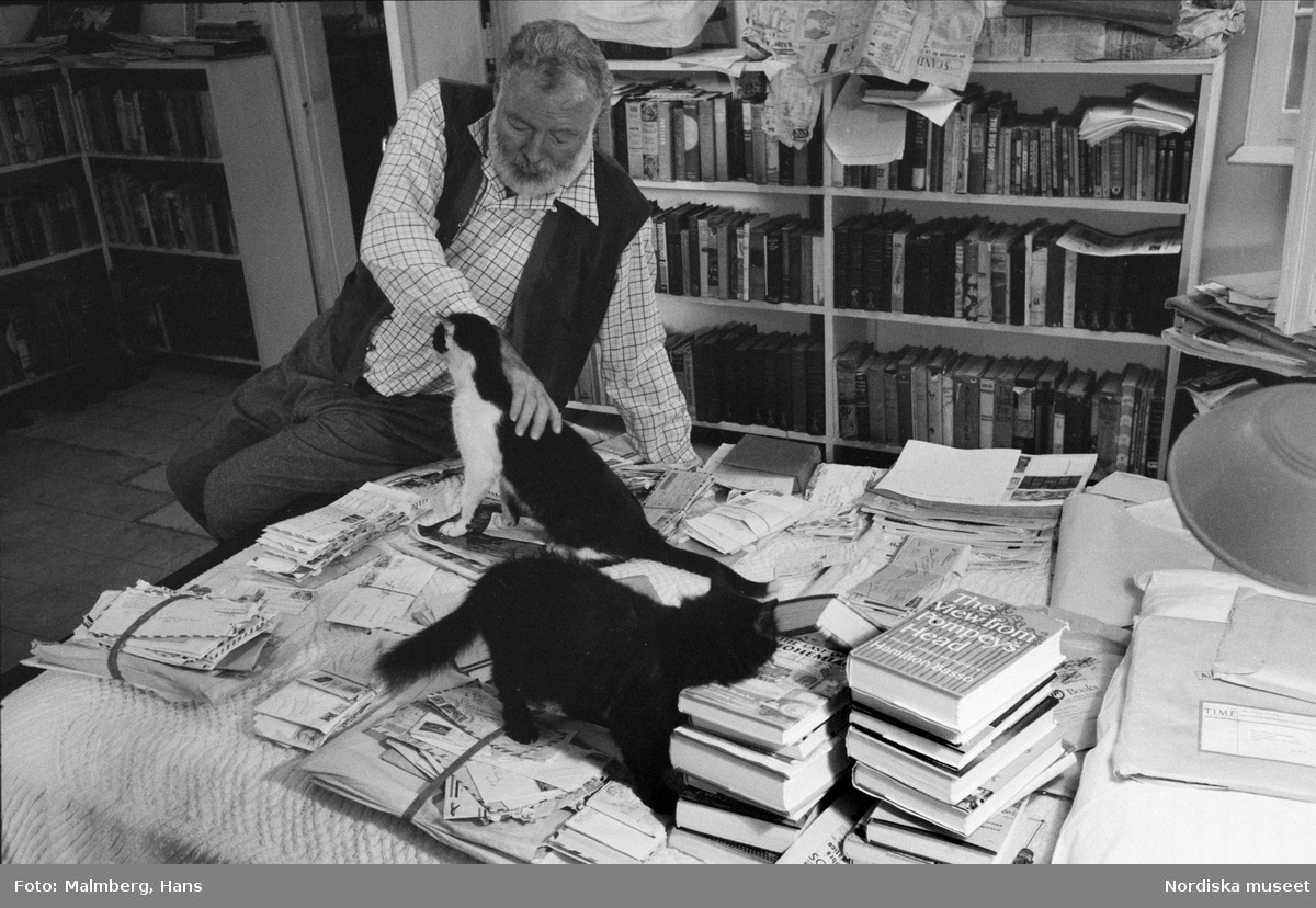 Författaren Ernest Hemingway leker med katter vid ett bord i sitt hem Finca Vigía, San Francisco de Paula, Kuba