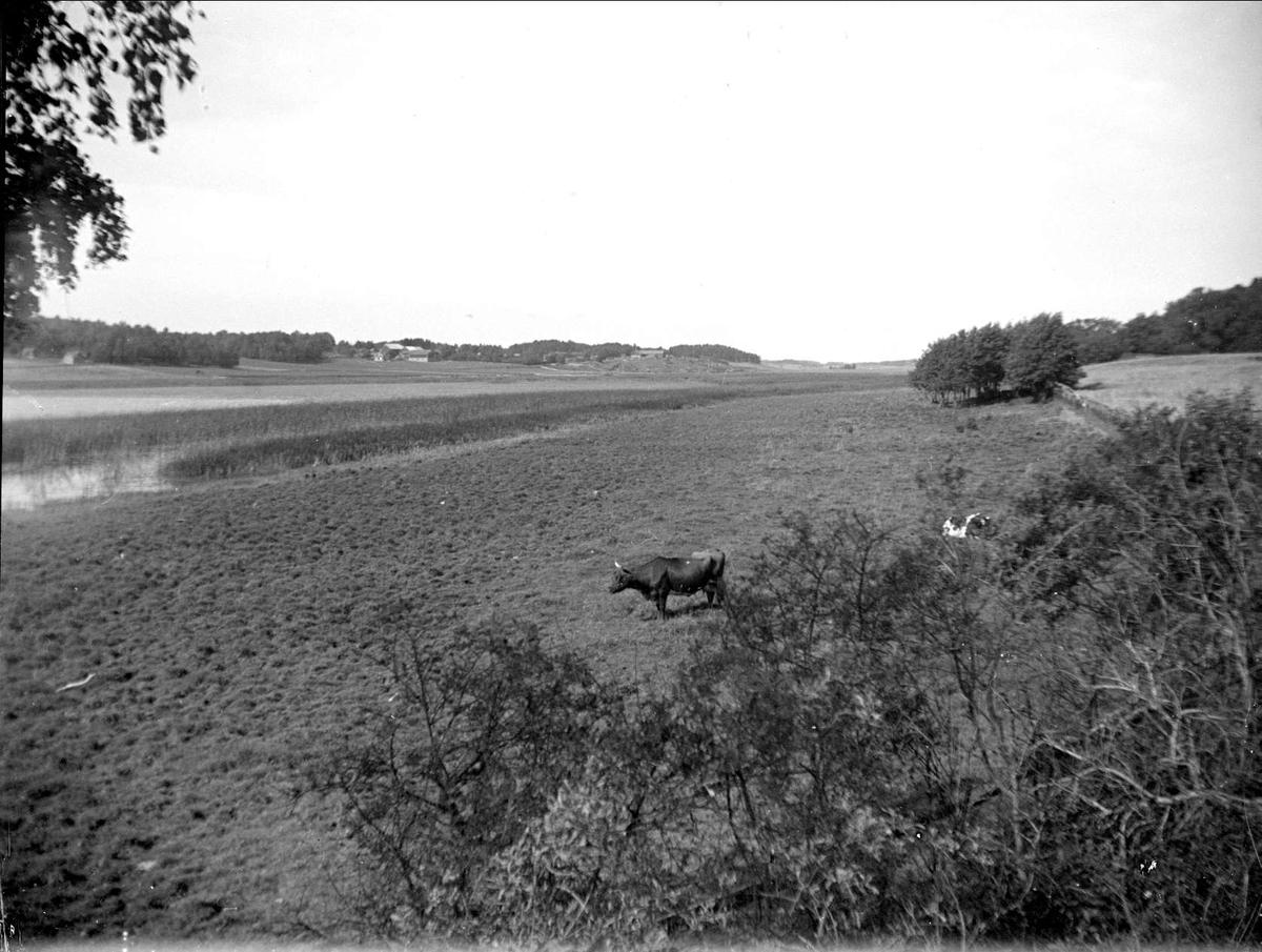 Strandäng vid Dalbyviken, Hammarskog, Dalby socken, Uppland september 1929
