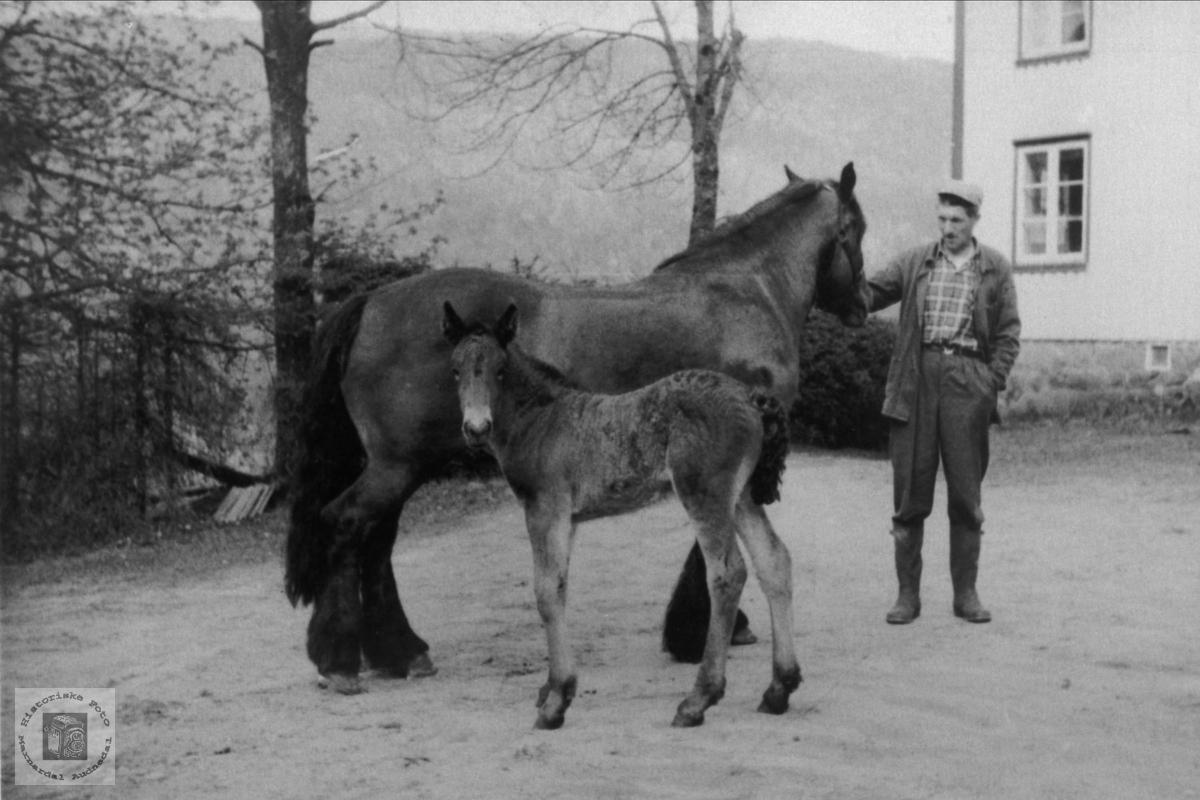 Ola Thoreson Foss med hest og fole, Bjelland.