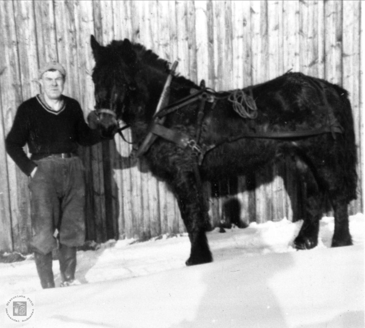 Portrett av Torje Haraldstad med hesten, Bjelland.