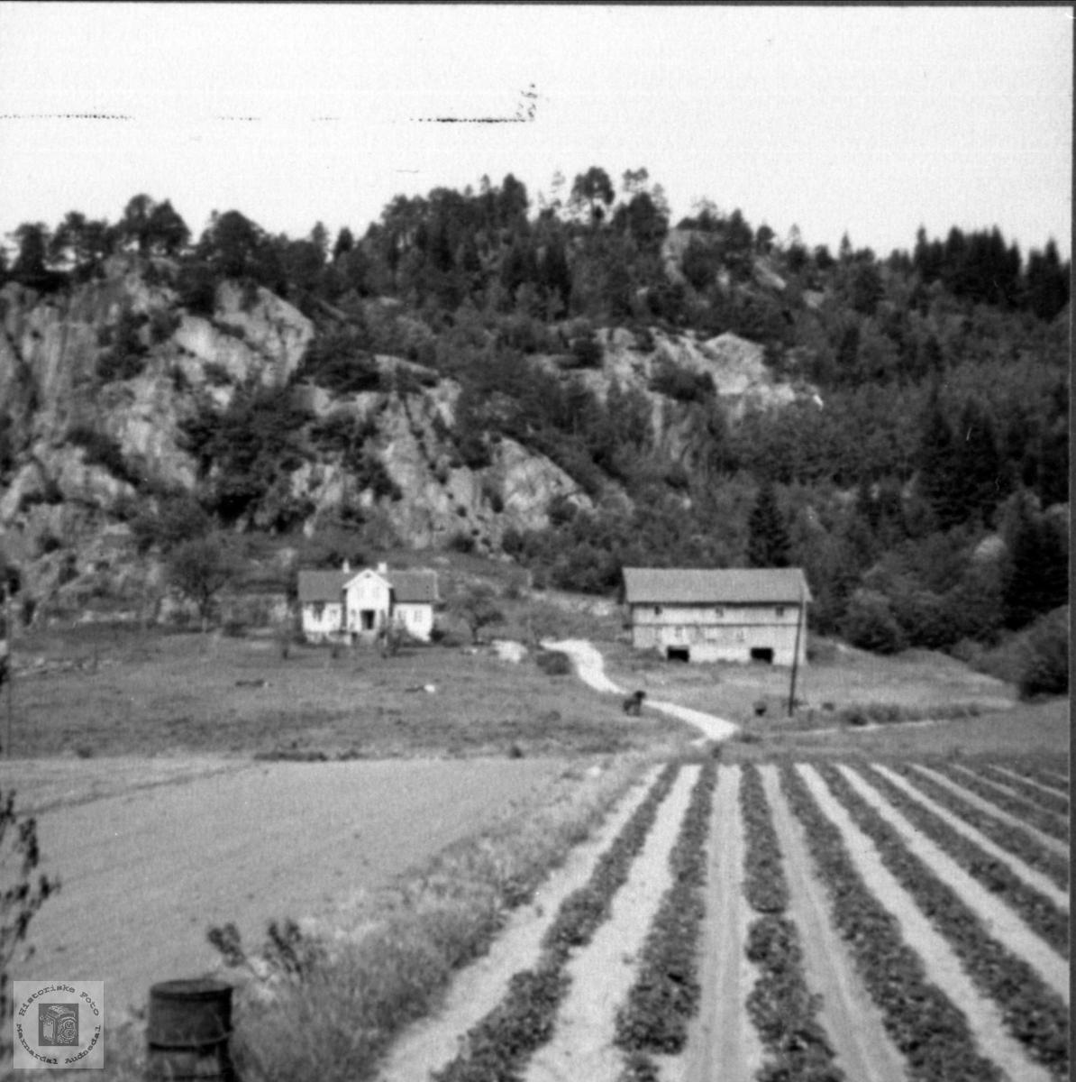 Gardsbruk. Verdalen, Laudal.