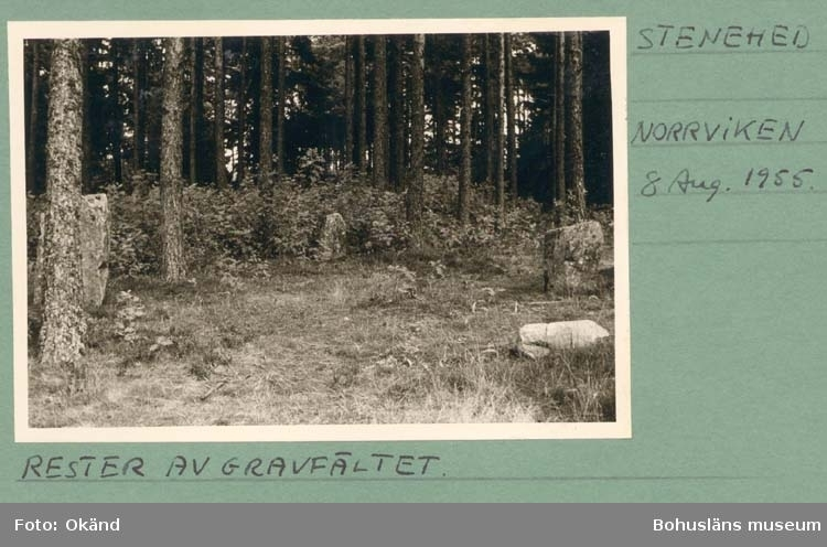 """Noterat på kortet: """"Stenehed. Norrviken."""" """"Rester av Gravfält."""" """"8 Aug. 1955."""""""