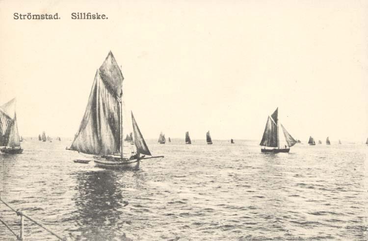 """Tryckt text på kortet: """"Sillfiske. Strömstad."""""""