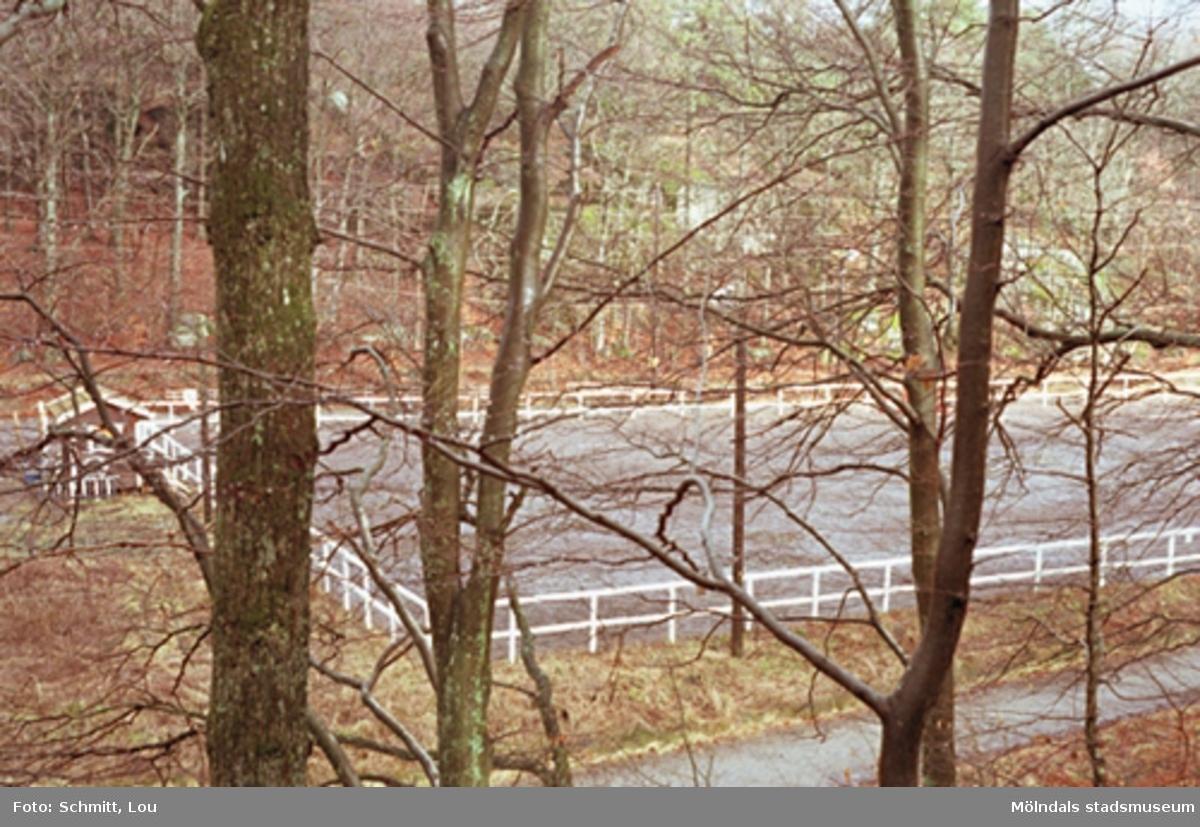En paddock som ligger i närheten av Gunnebo slotts ridhus. Planen skymtar fram mellan träden.