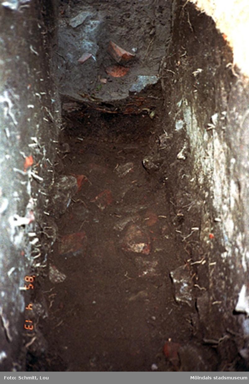 """Fotodokumentation av drivhus """"B"""" vid Gunnebo slott, september-oktober 1995."""