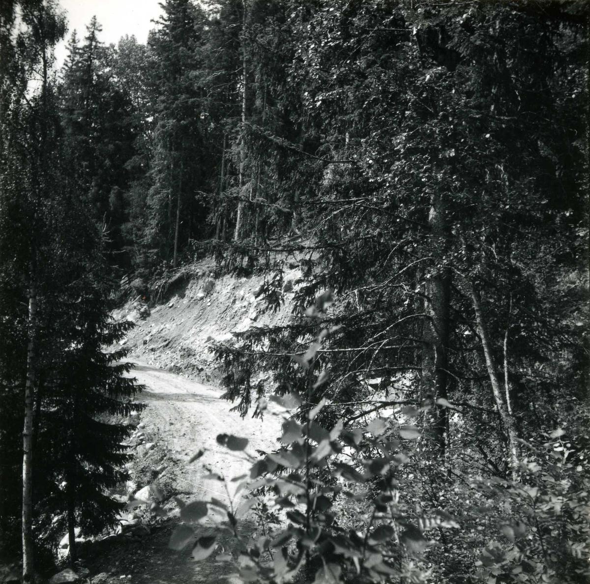 Tilløpstunnel frå Vesås. Skogsveg