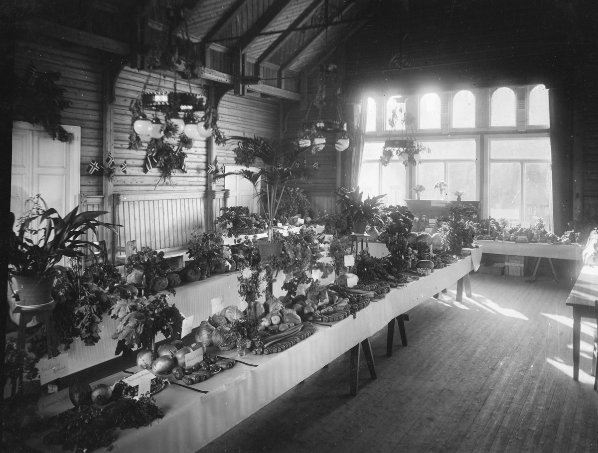 Utstilling, planter