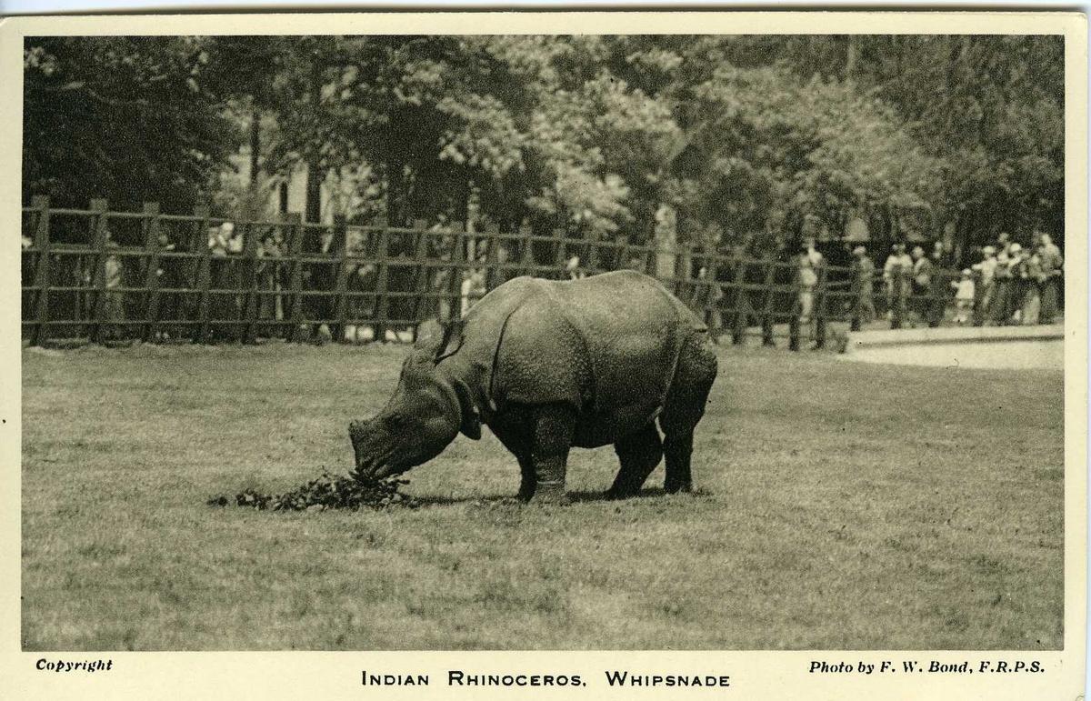 Postkort med dyremotiv.