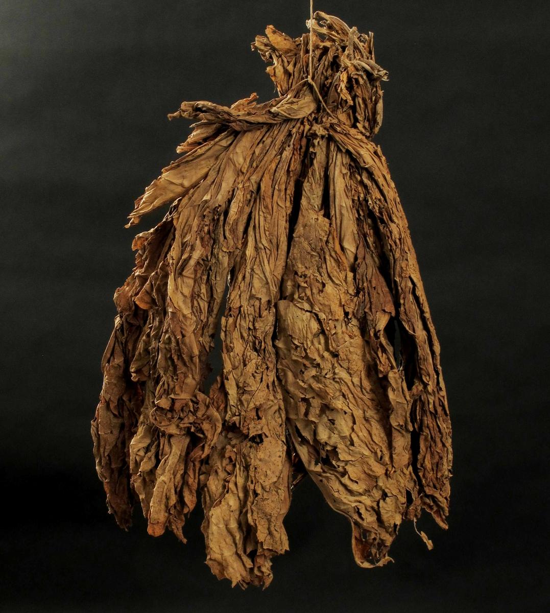 Tobakksblader, buntet m. papirhyssing og tørket.