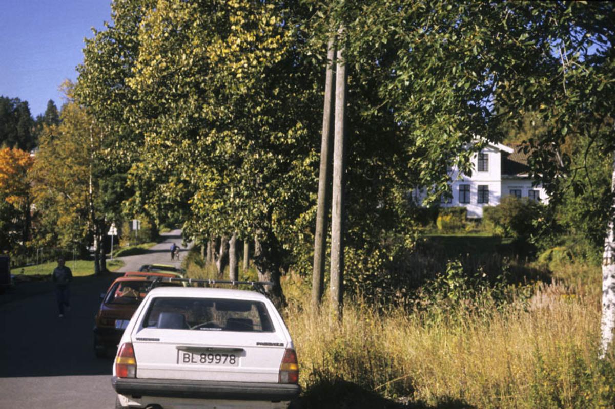 Haneborg allé med Haneborg gård til høyre.