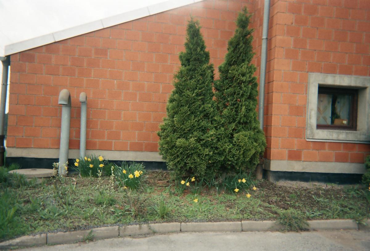 Motiv fra Lørenskog Rufsete bedd med to bartrær og påskeliljer foran en murvegg.