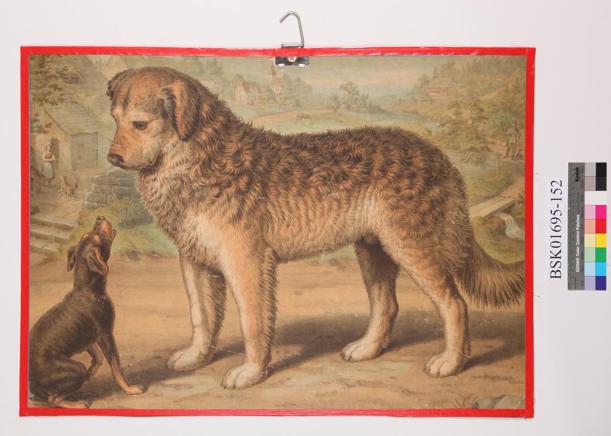 Stor og liten hund