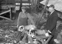 Einar Halseth  Revegård i Strinda  Platinarev