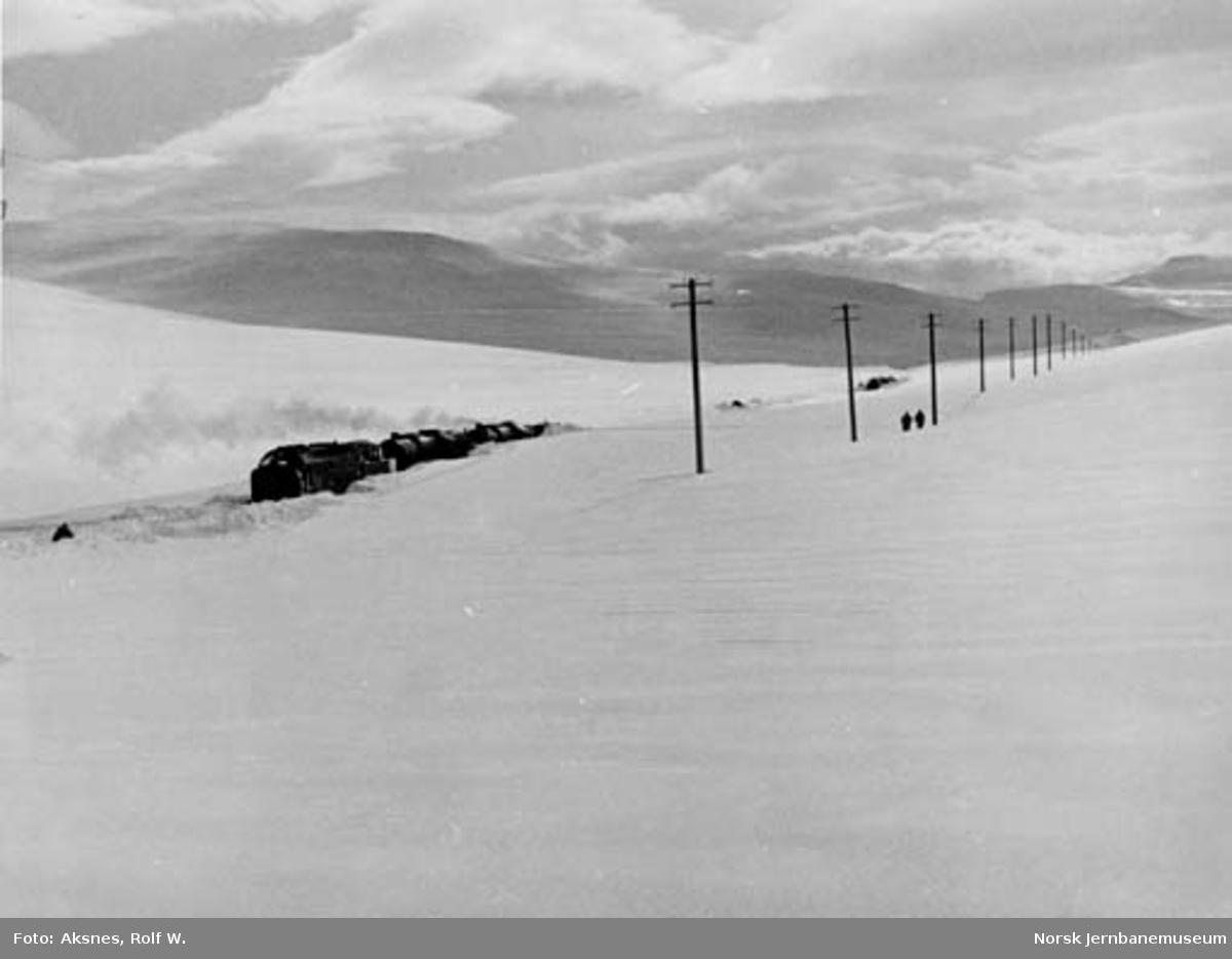 Snøryddingstoget på Saltfjellet med roterende snøplog og damplokomotiver