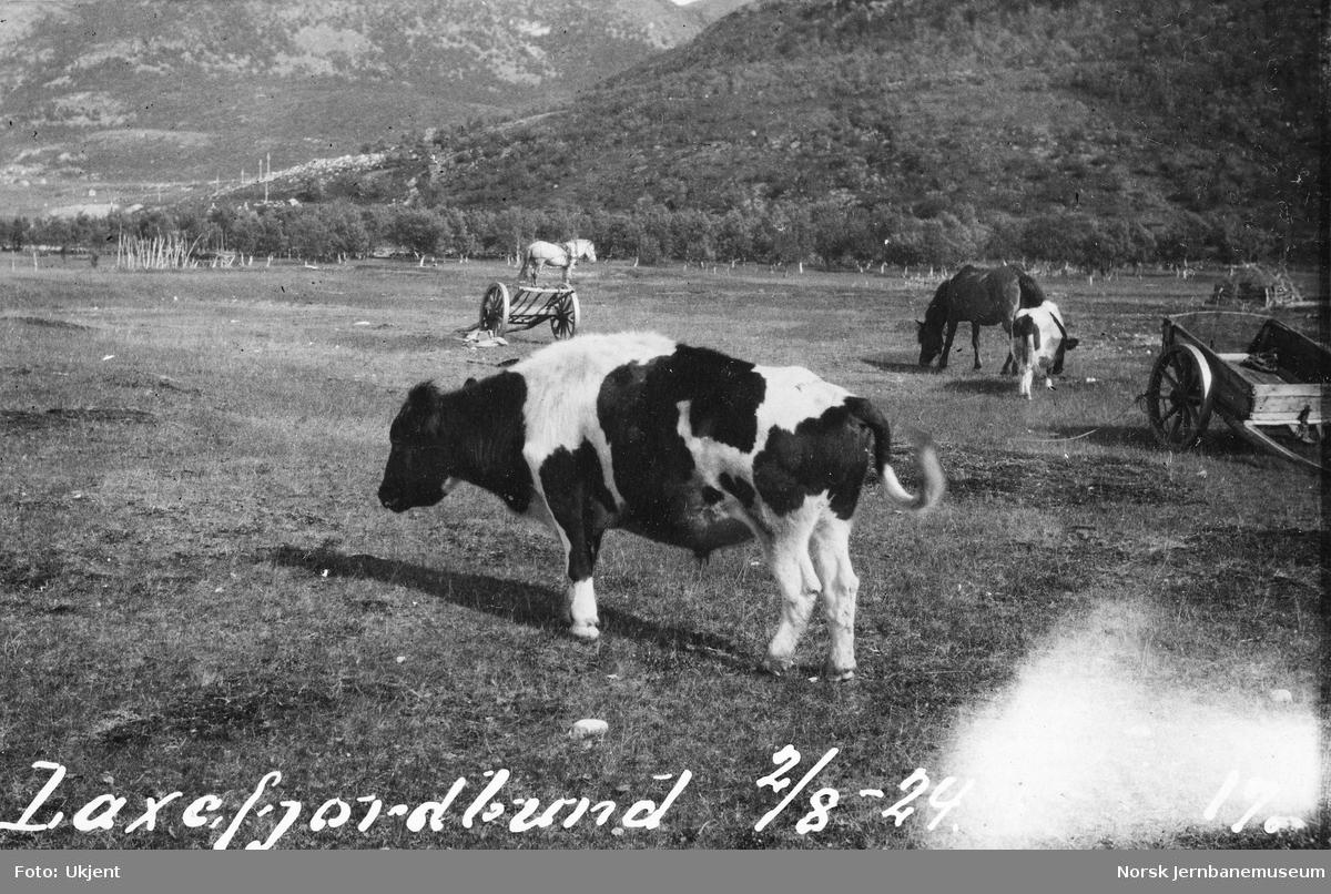 Parti ved Laksefjordbotn